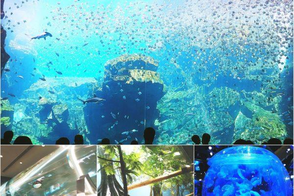 【體驗推薦】感受度破表的「Xpark 都會型水生公園」,13大夢幻展區、企鵝咖啡館、浪漫水母館等著您!
