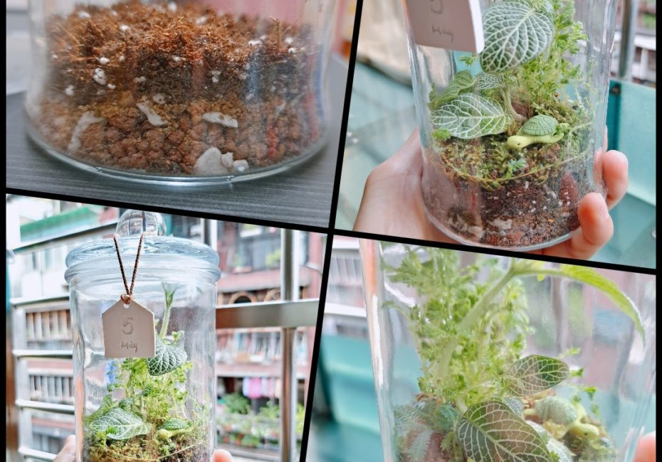 苔蘚生態瓶